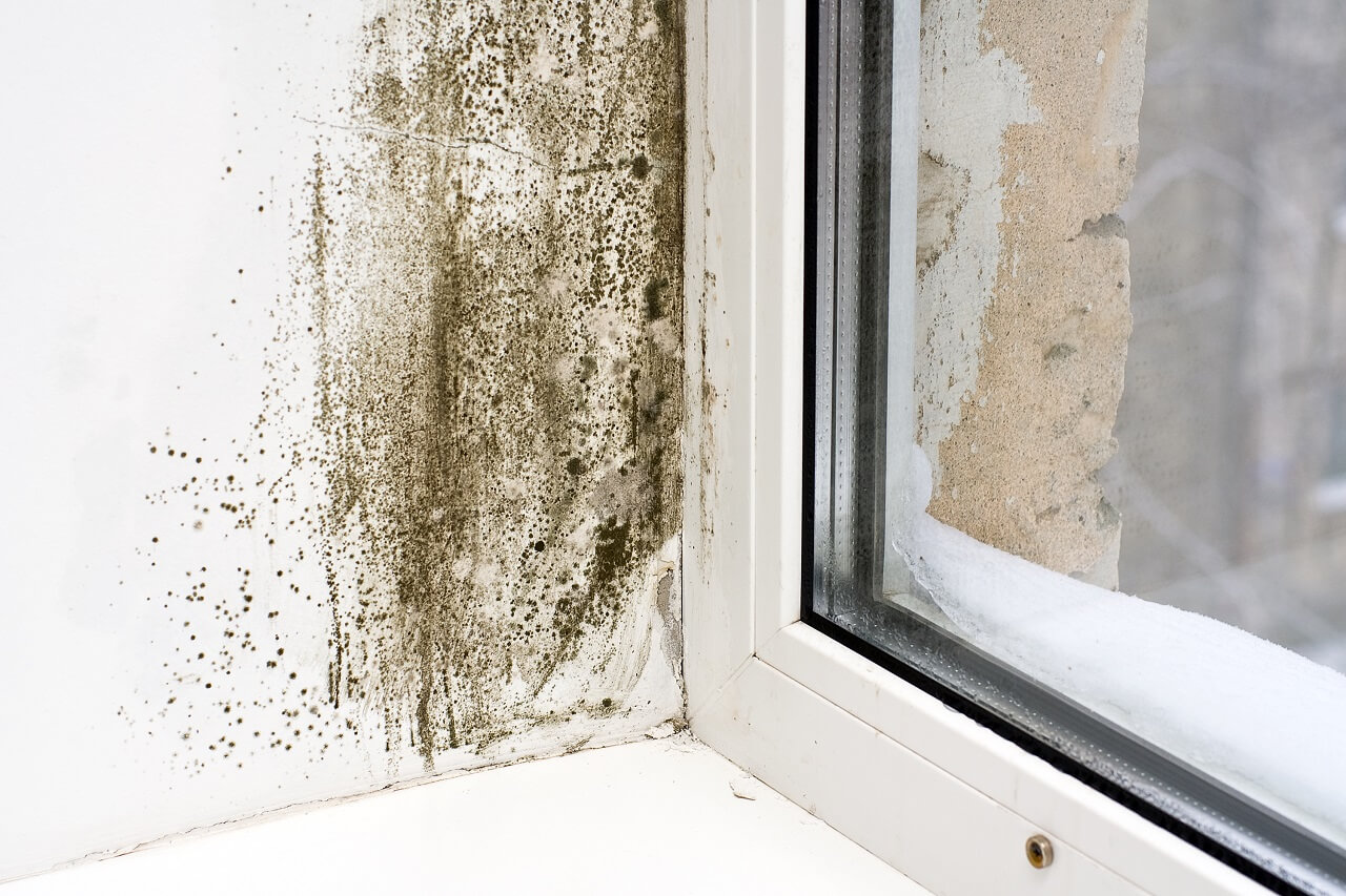 prevent mold growth in the home to experience a healthier environment